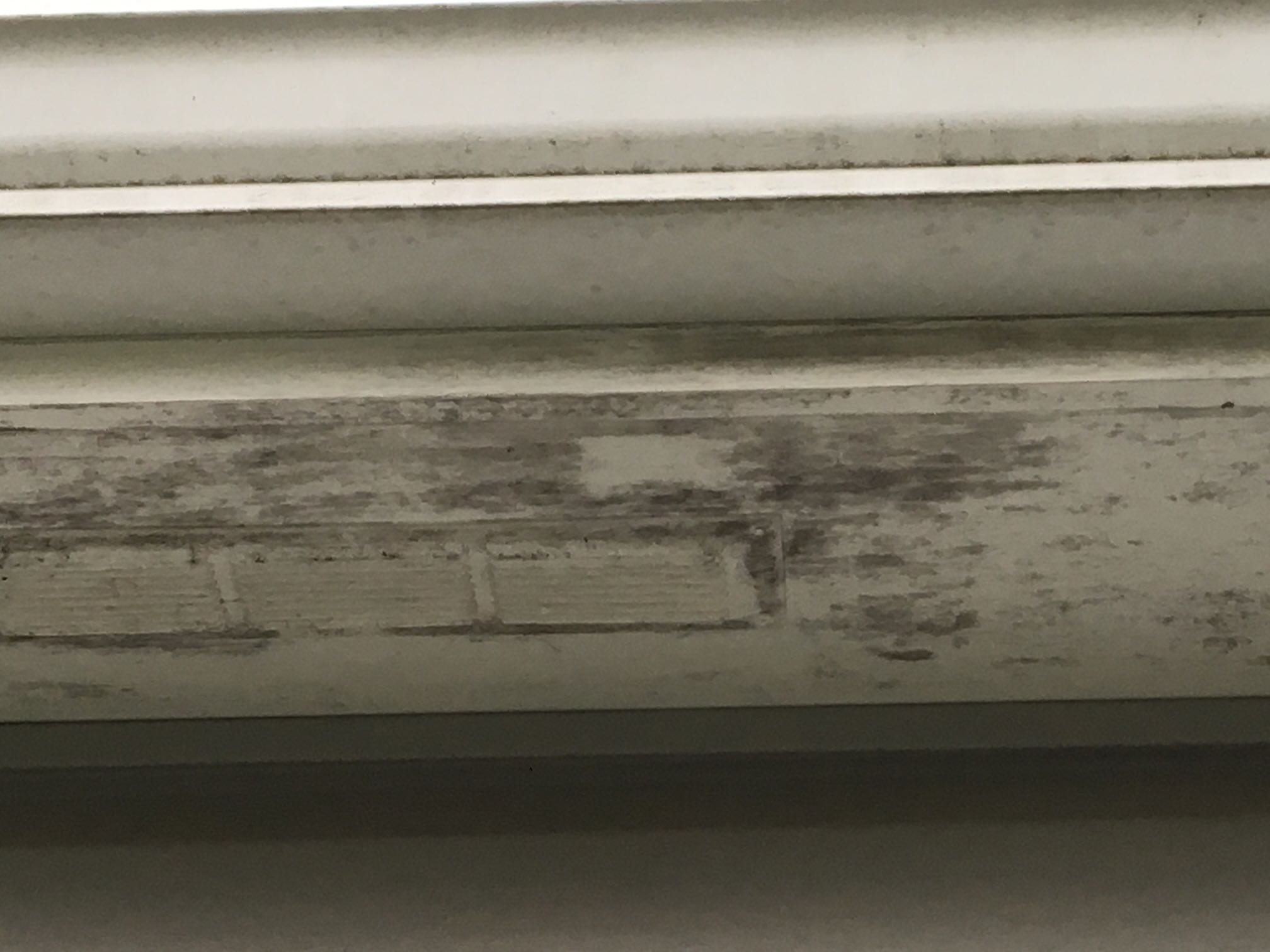 Mildew On The Eaves Of A House